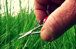 Cutting Grass with Scissors